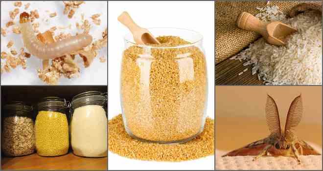 Эффективные методы борьбы с пищевой молью