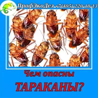 Чем вредны тараканы для человека и какие болезни переносят?