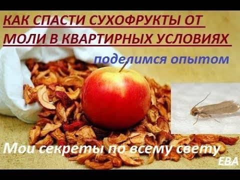 Как избавиться от фруктовой или пищевой моли на кухне?