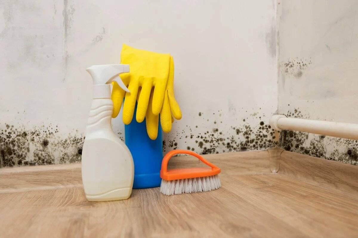Плесень и запах сырости в квартире: как избавиться в домашних условиях