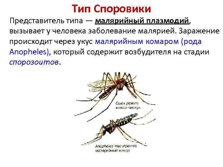 Укусы комаров: что делать с опухолью и покраснениями и как выглядит сам укус?