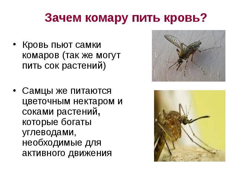 Зачем нужны комары, какая от них польза