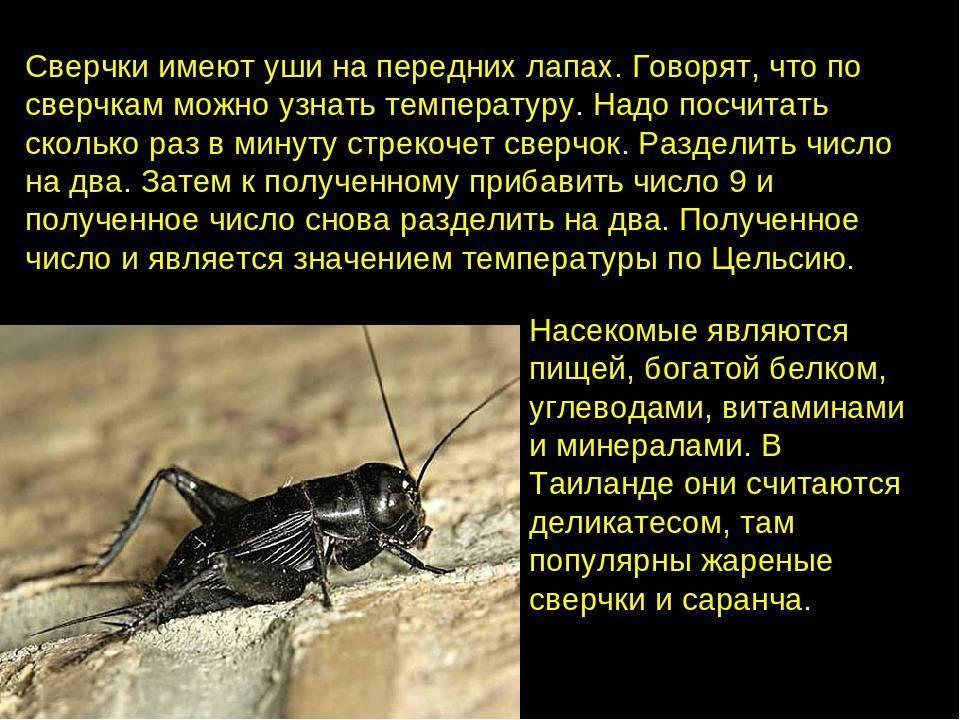 Могут ли тараканы кусать человека и опасен ли укус?