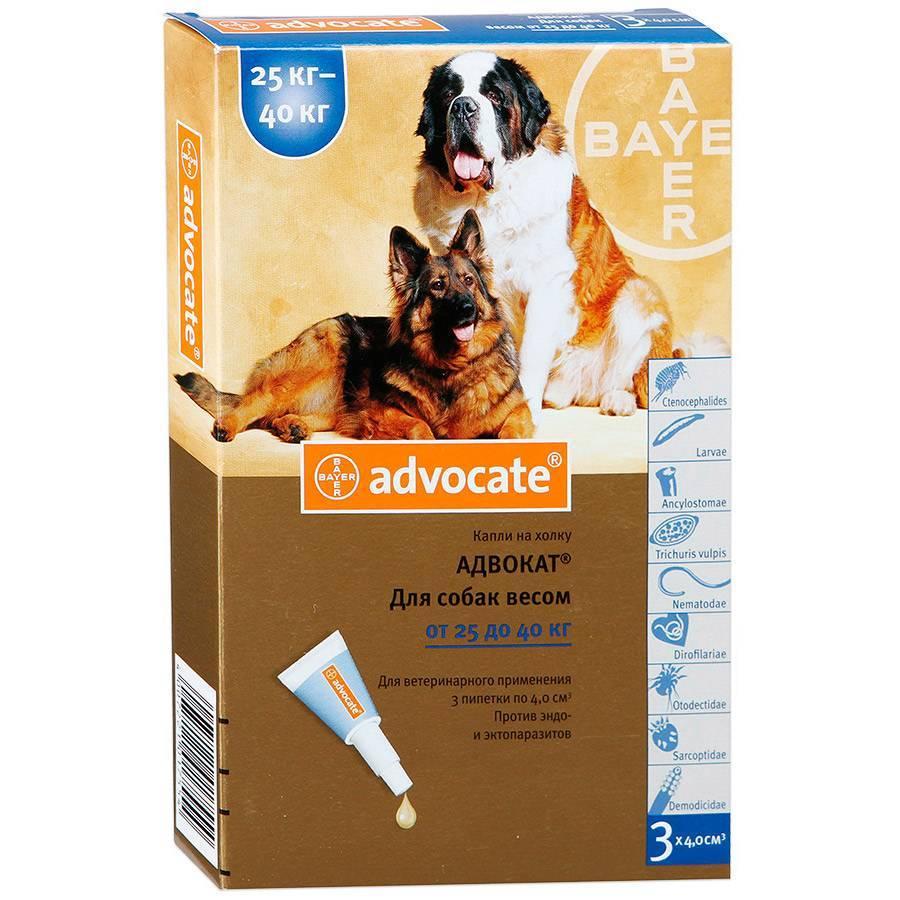 Адвокат для собак, инструкция по применению капель от блох