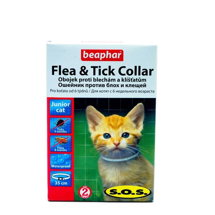 Ошейник от блох для кошек: принцип работы и совету по выбору -блог tam.by