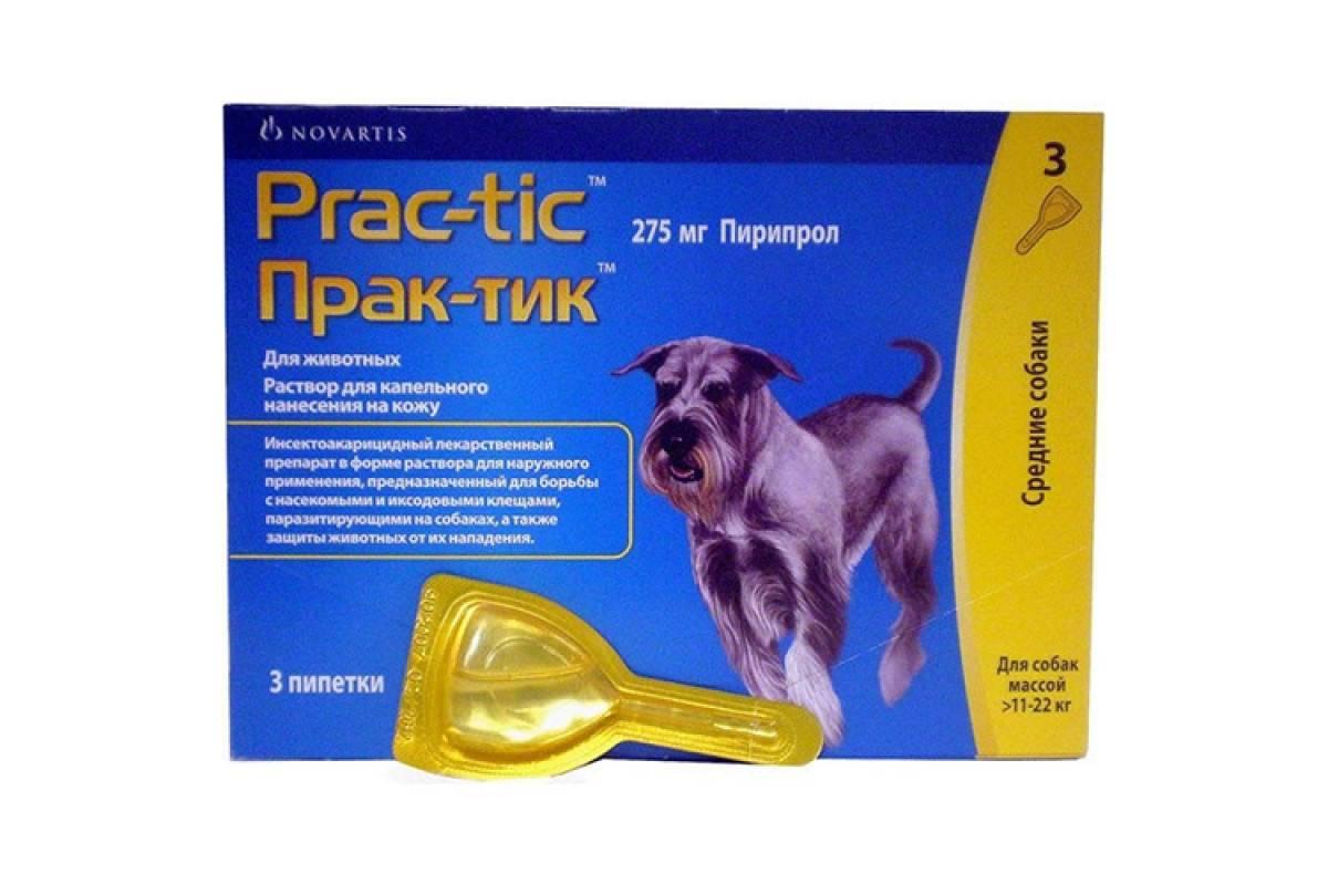 Практик от клещей для собак — описание, эффективность, правила применения