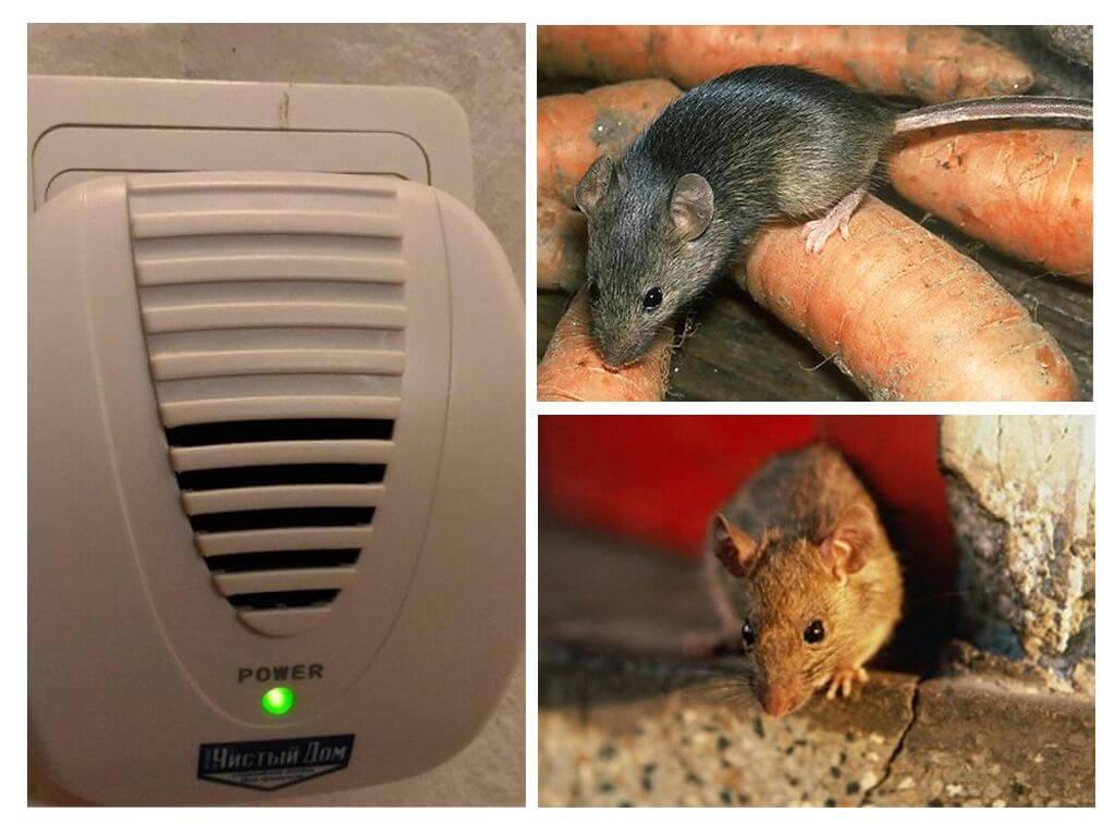 Узнайте, какие запахи не любят мыши