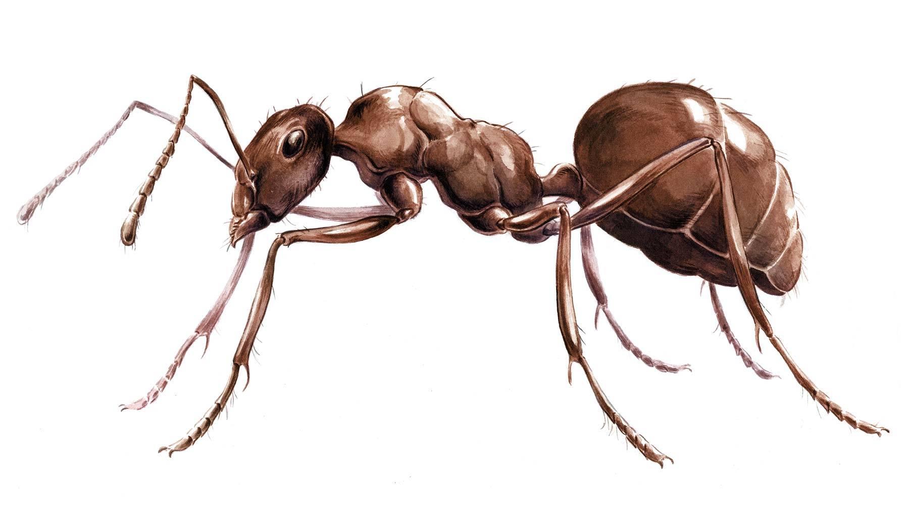Сколько лапок у муравья и пауков?
