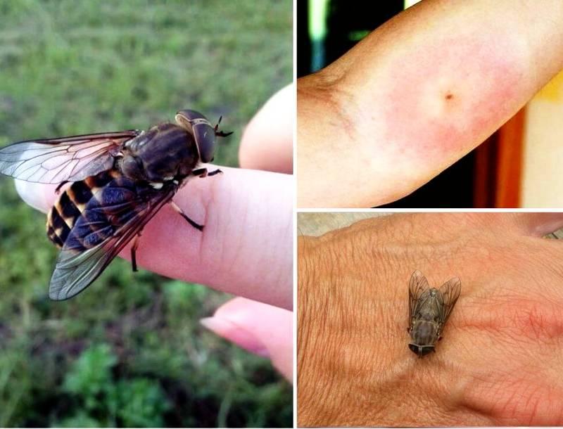 Опасность лесных ос для человека: болезненность укусов и вред для здоровья