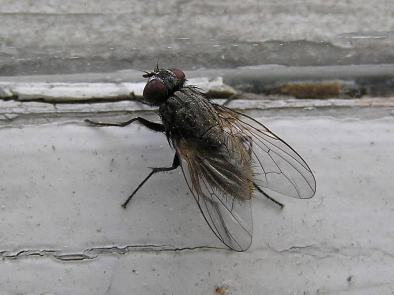 Тип строение ротового аппарата у жуков и иных насекомых