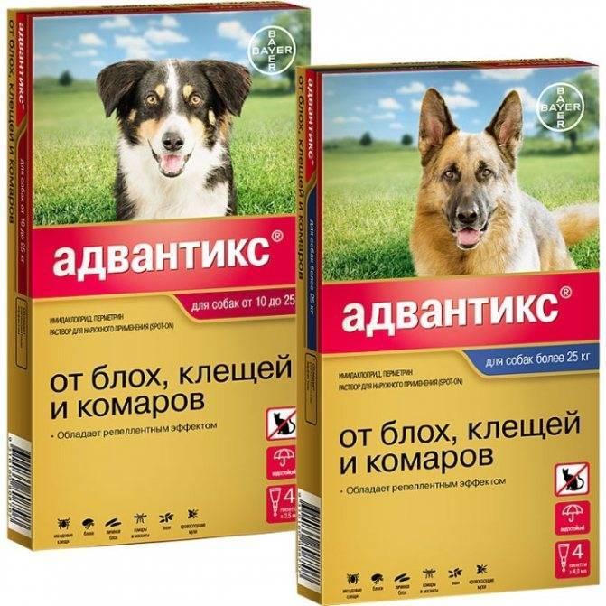 Адвантикс для собак – инструкция