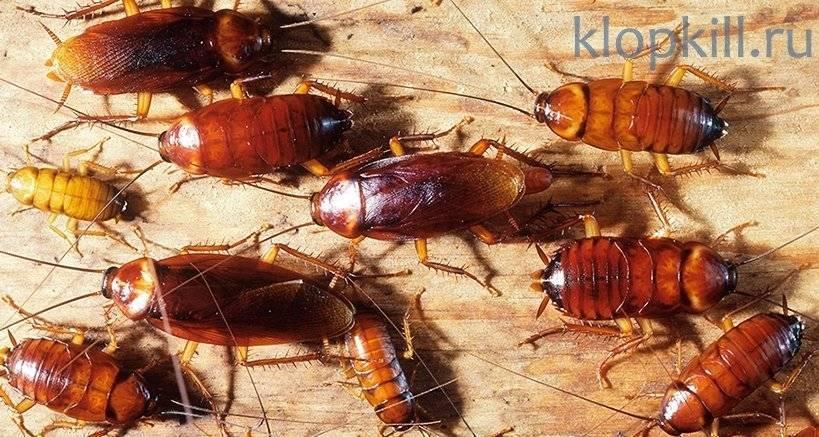 Вред от тараканов