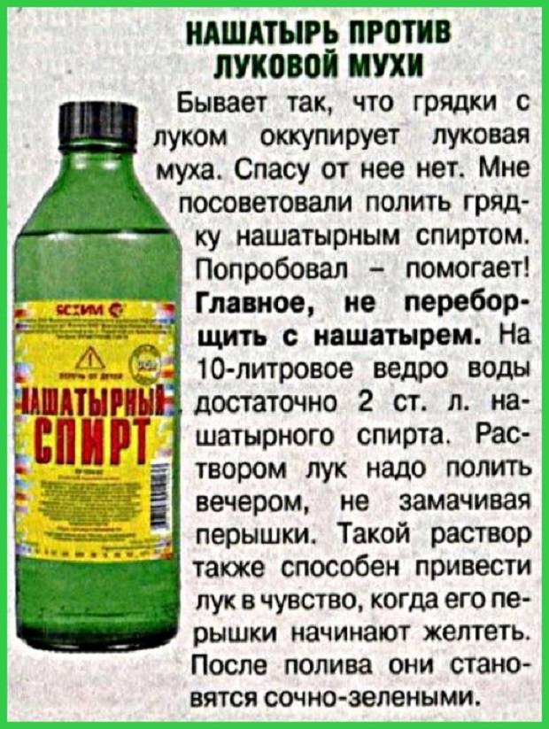 Нашатырный спирт от клопов – отзывы людей