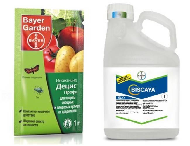 Как избавиться от тли в огороде: методики и препараты