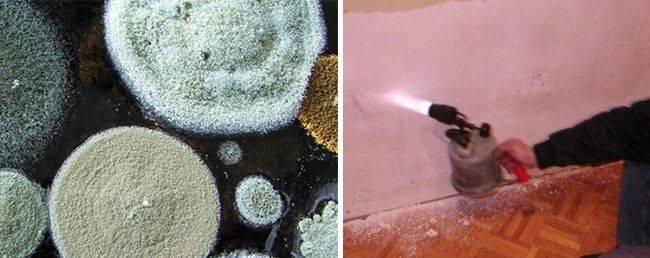 Как просушить погреб: избавляемся от конденсата, сырости, влажности, грибков и плесени