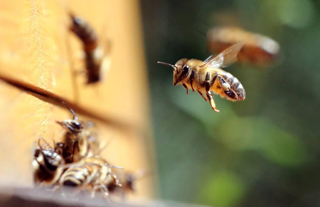 Что будет, если исчезнут пчелы | русская семерка
