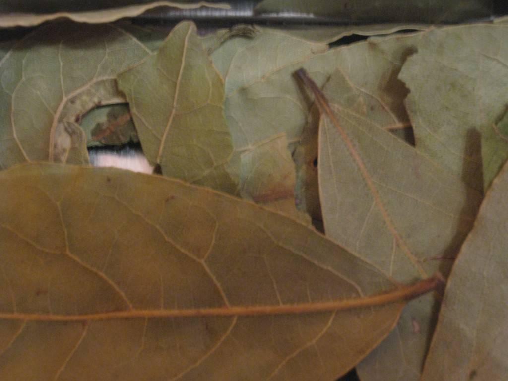 Как использовать лавровый лист против тараканов?