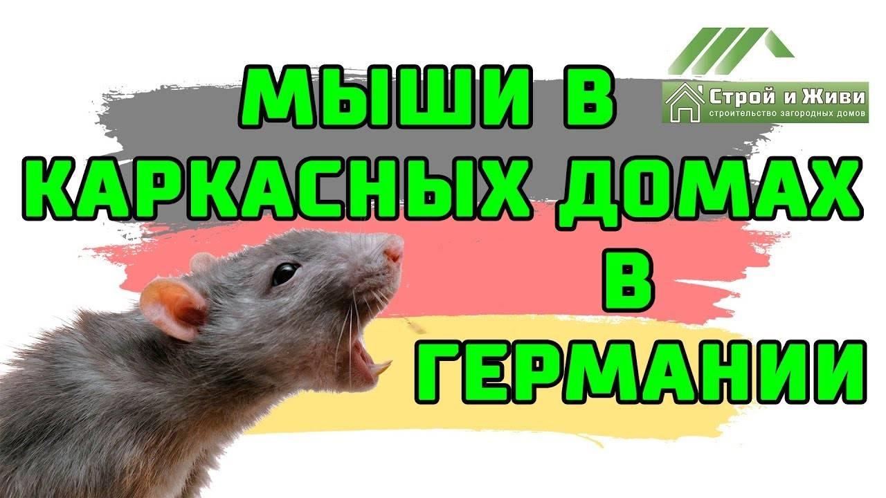 Как защитить каркасный дом от мышей и насекомых