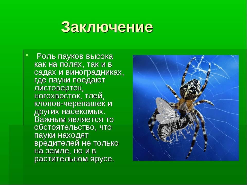 Зачем нужны осы – их роль и функции в природе