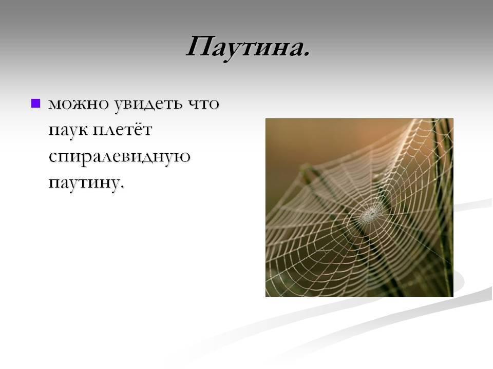Паутина – приметы, поверья и суеверия про паучью сеть