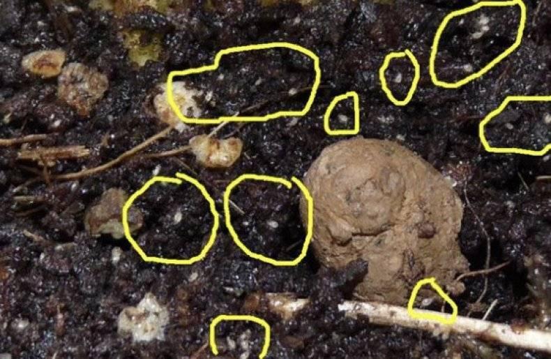 Что делать, если в орхидее завелись мошки: как узнать, почему появились мелкие насекомые, и как избавиться от черных и белых вредителей в домашних условиях? selo.guru — интернет портал о сельском хозяйстве