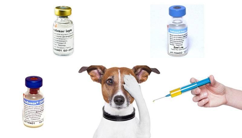 Вакцинация кошек, собак и кроликов как профилактика заболеваний