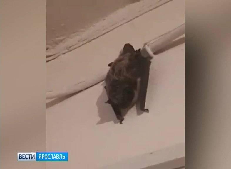 Как выгнать летучую мышь из квартиры: ловушка и плотная одежда