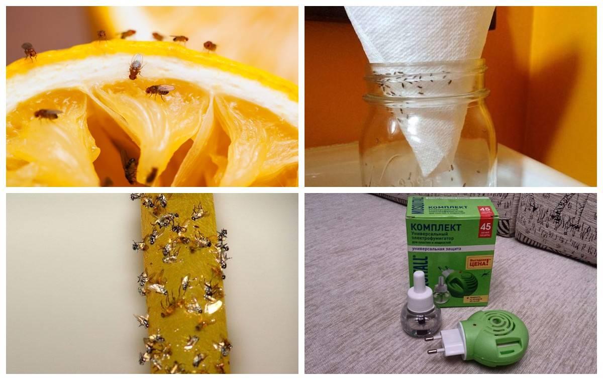 Как избавиться от мух в квартире — 9 работающих способов и в доме дышится легко!!!