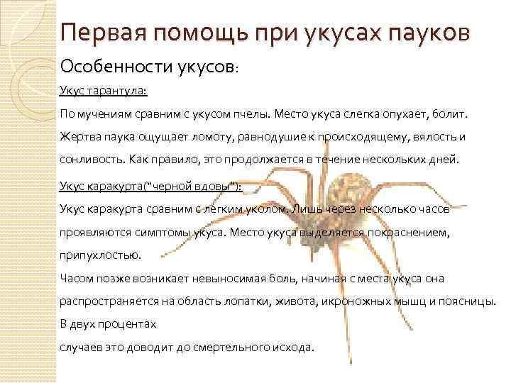 Что делать при укусе крымского тарантула. внимание! ядовитые пауки идут в атаку