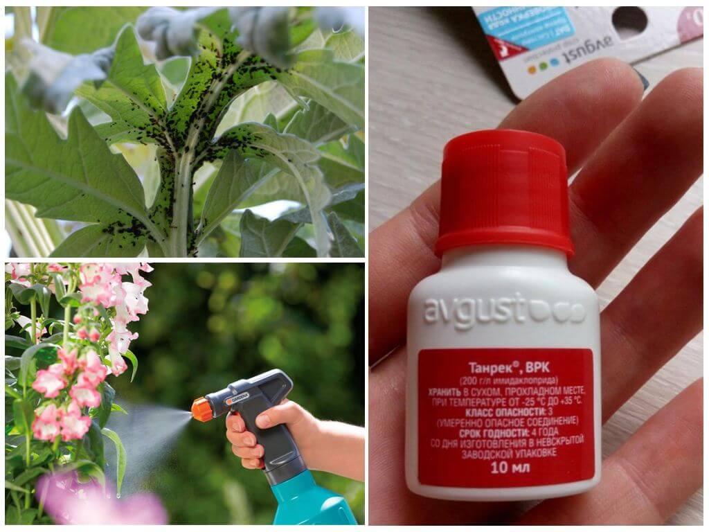 Как применять «танрек» в садоводстве и огородничестве