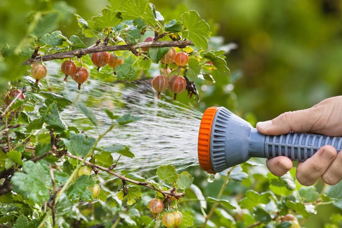 Как избавиться от тли на деревьях - обработка химическими препаратами и народными средствами