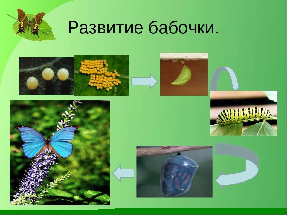 Гусеницы в природе и дома