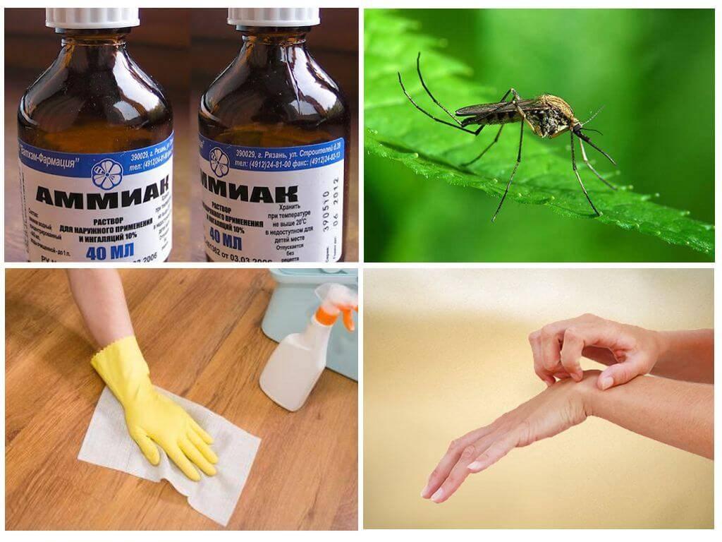 Используем нашатырный спирт от тараканов