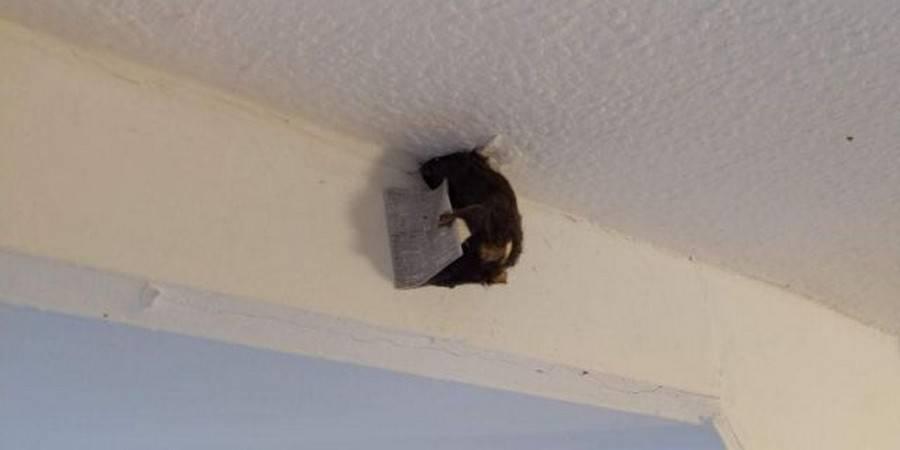 Мыши в потолке: что делать и как избавиться? лучшие способы.