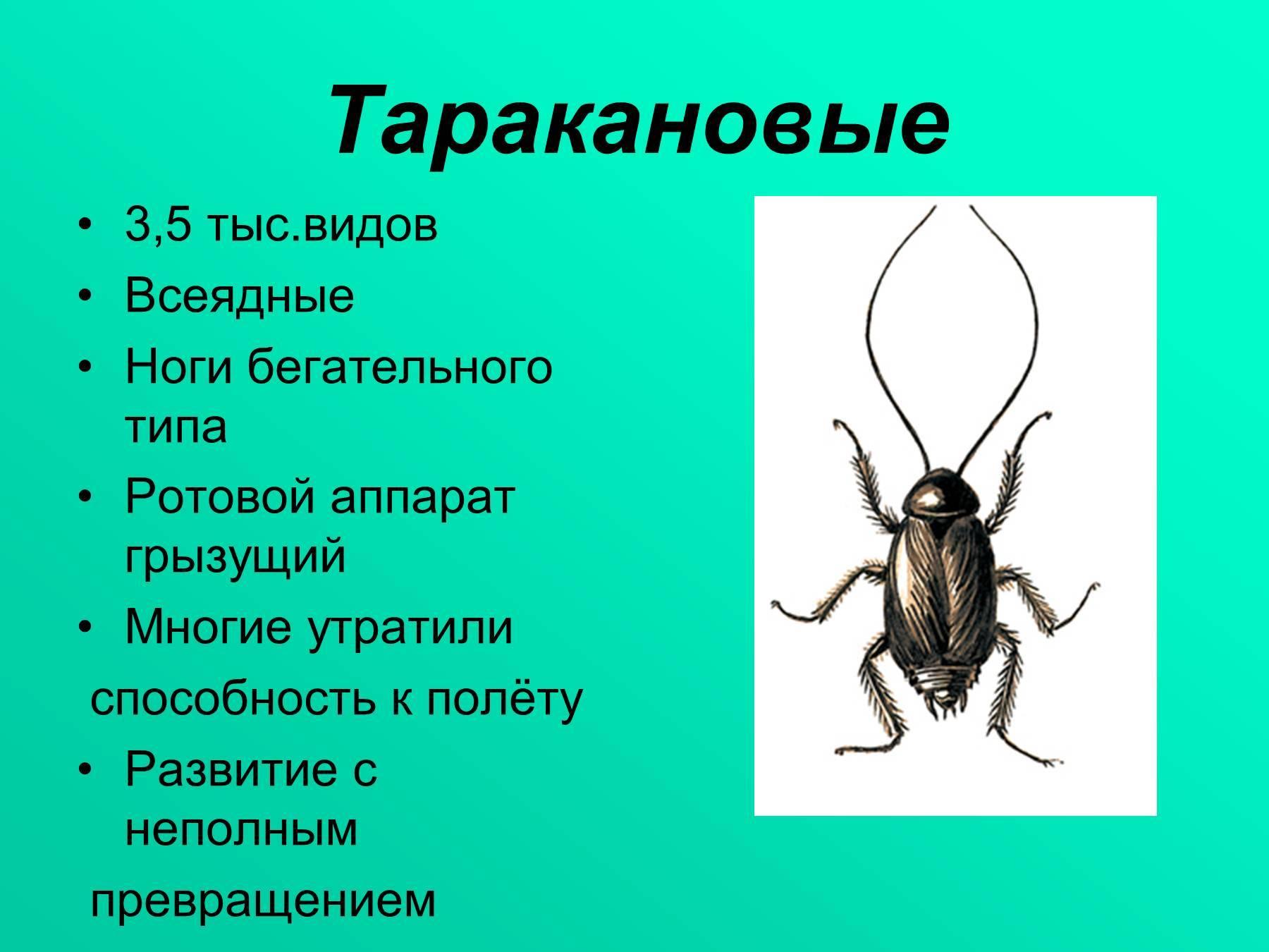 Почему исчезли тараканы