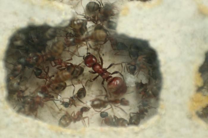 Как готовятся к зиме муравьи