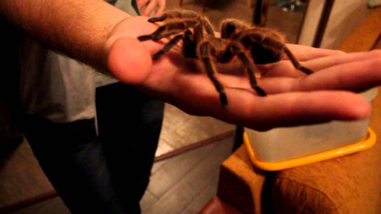 Как перестать бояться пауков — избавляемся от арахнофобии навсегда