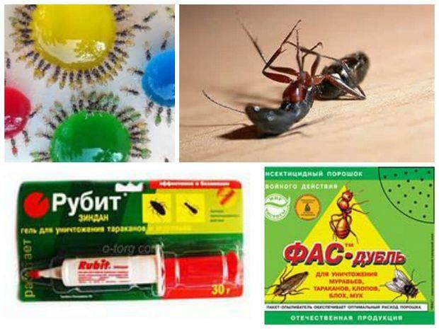 Эффективное средство от муравьев в квартире