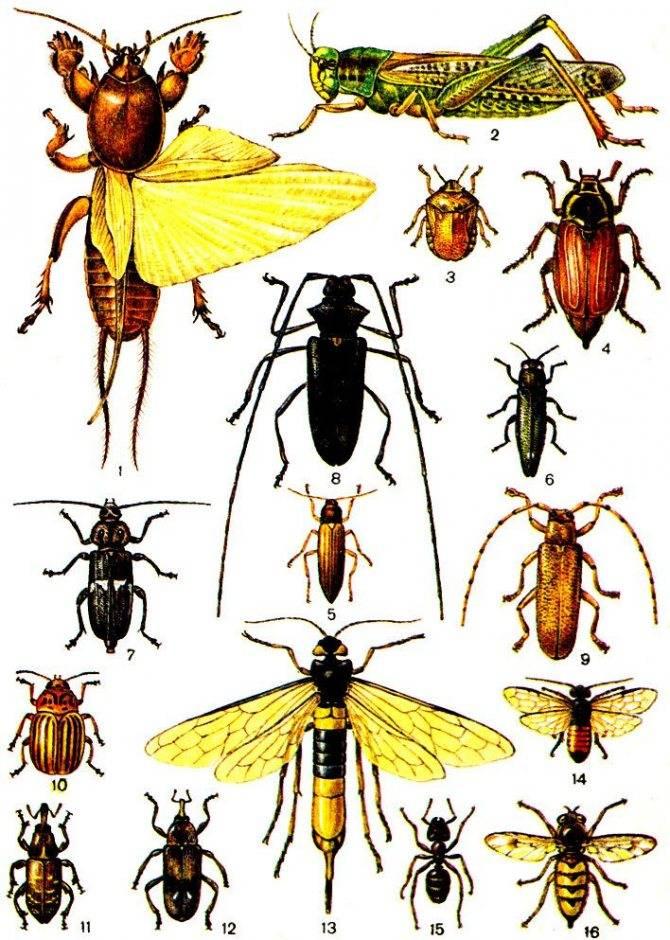 Нелюбимые соседи: какие насекомые-вредители отравляют жизнь человека