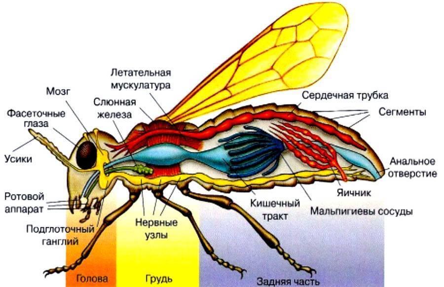 10 удивительных и интересных фактов про комнатных мух - mnogo-krolikov.ru