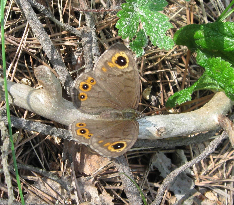 Бабочки (выпуск 5)
