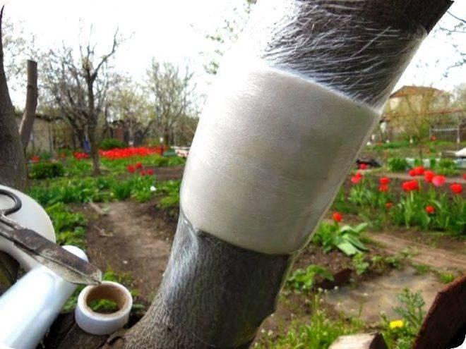 Защита плодового сада и избавление от муравьев: лучшее средство защиты дерева и борьбы с насекомыми