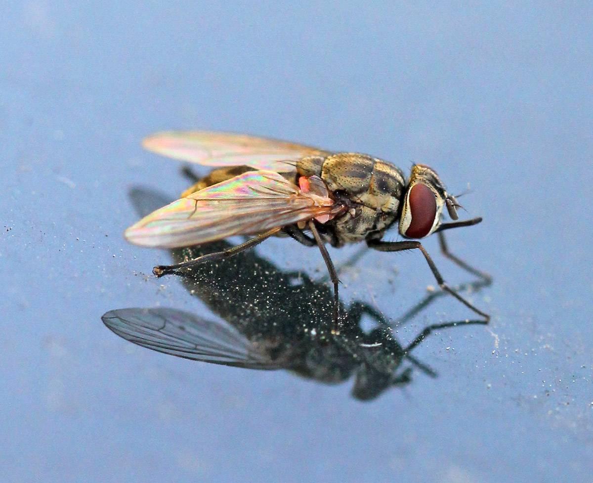 Самая большая муха в мире - читайте!