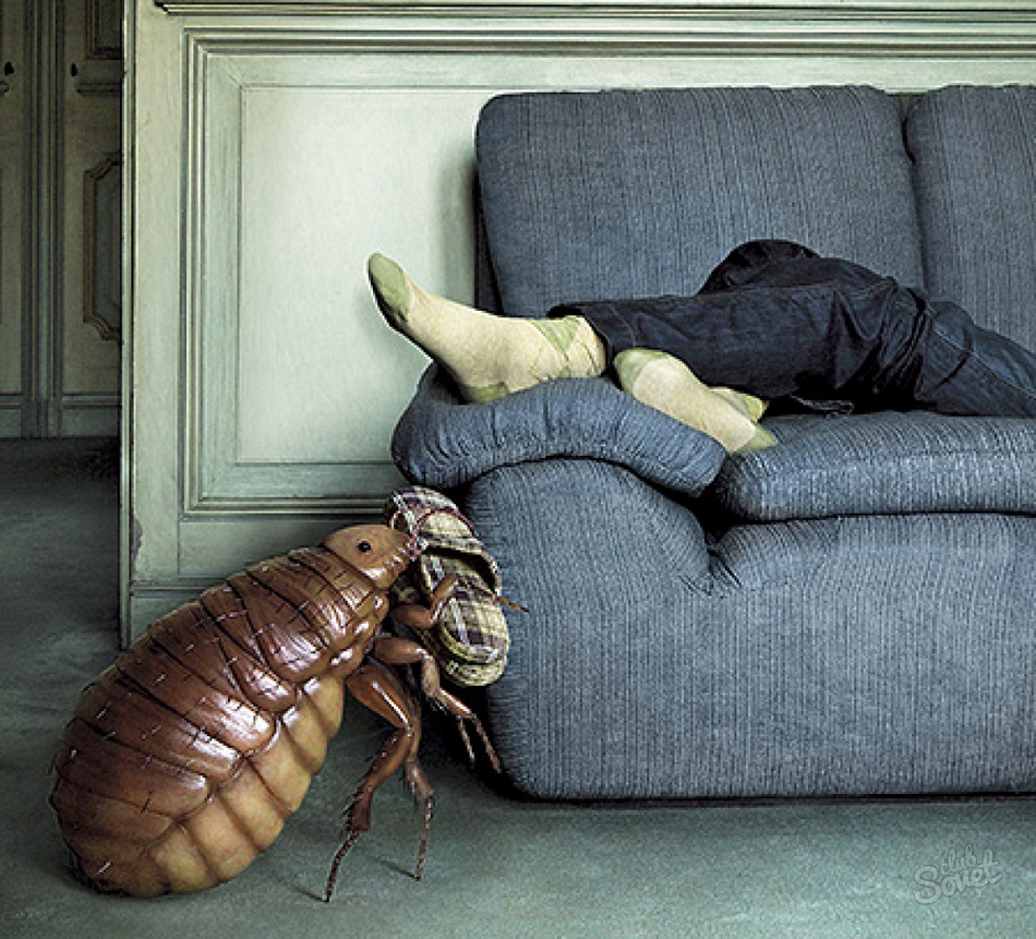 Как избавиться от сколопендры в частном доме