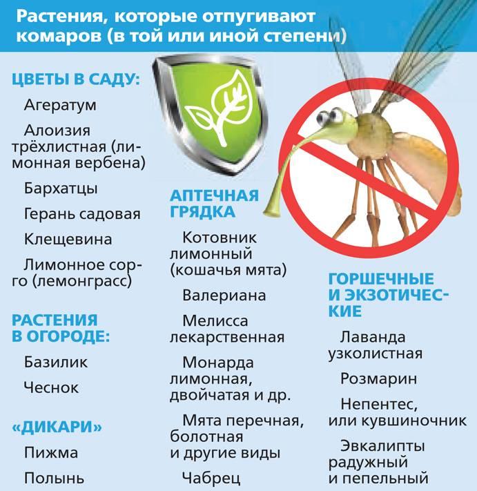 Растения-репелленты: что посадить, чтобы отогнать надоедливых насекомых на supersadovnik.ru