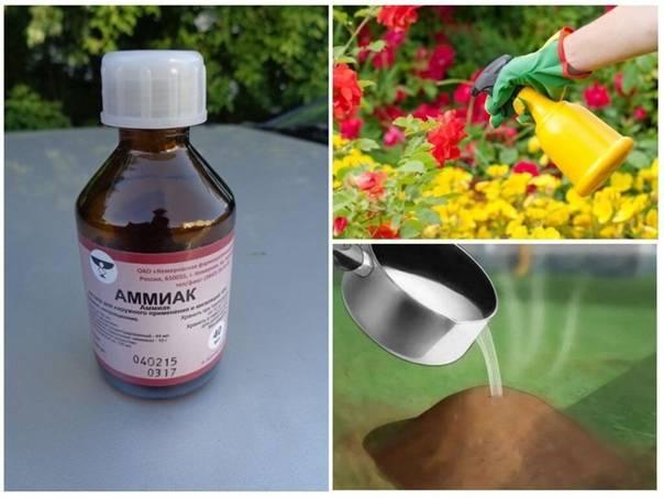 ✅ о борьбе с муравьями на огороде и в саду с помощью нашатырного спирта - tehnomir32.ru