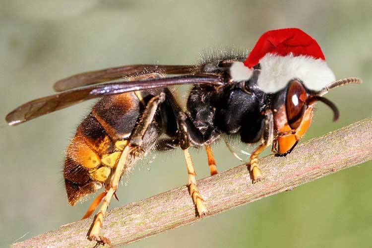 Где живут и зимуют шершни: жизнь насекомых в гнезде