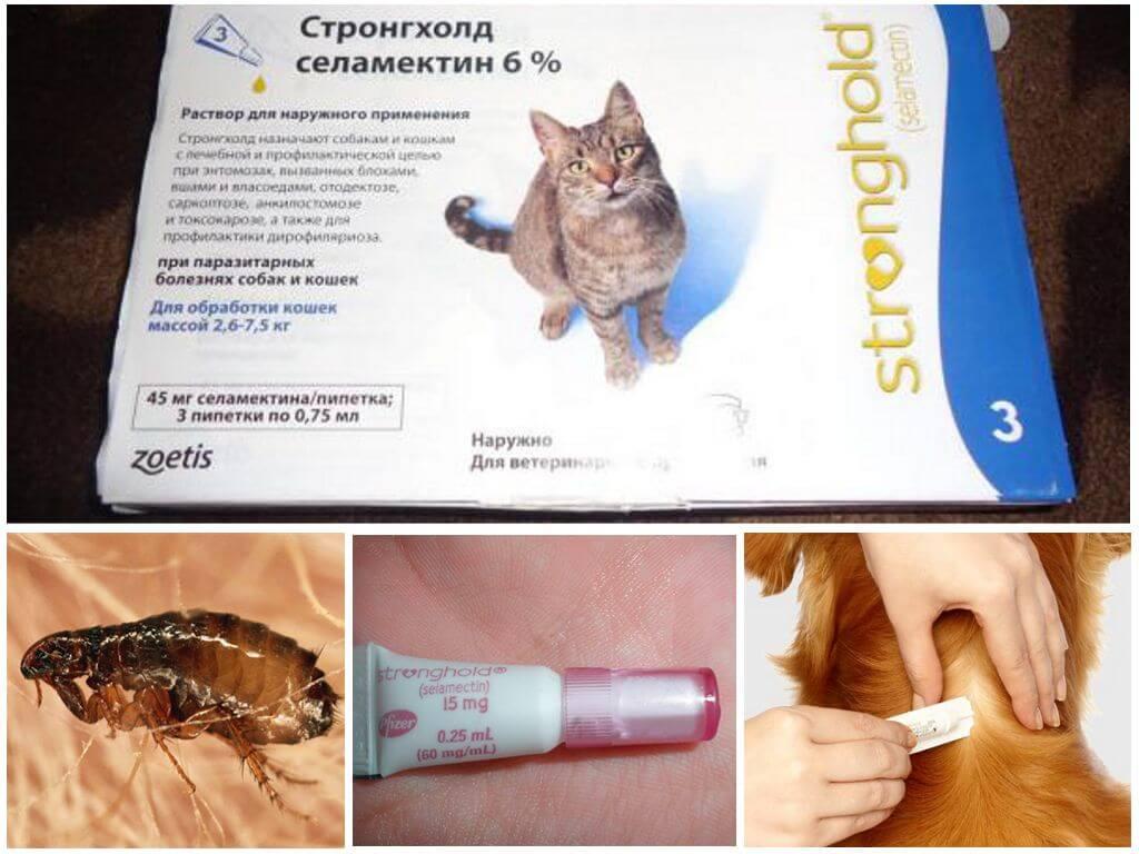 Капли стронгхолд для кошек и котят: инструкция по применению, показания и противопоказания, аналоги, отзывы