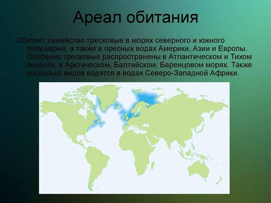 Ржанка птица. описание, особенности, виды, образ жизни и среда обитания ржанки   живность.ру