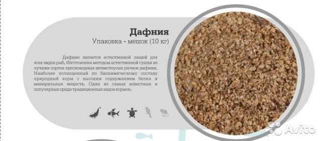 Описание дафнии и ее жизненного цикла: среда обитания, питание рачка, процесс размножения